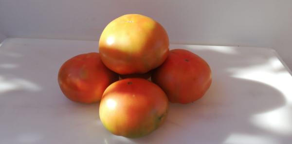 tomate de primera